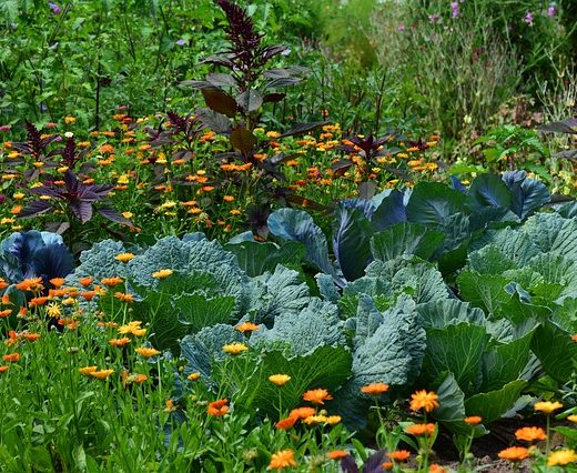 Which Vegetables To Plant In Hugelkultur beds?